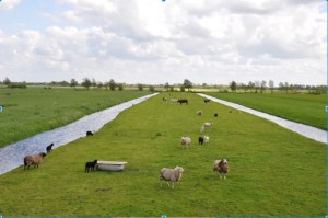 dutch polder