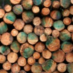 Wood-For-Fuel Logging Increases CO2 and Damages Forest Health