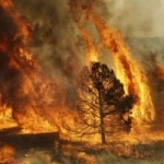 USDA: Climate Change Will Double Area Burned in Wildfires By 2050