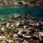 Climate Change, El Niño Prolong Coral Die-Off