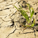 A Critical Issue: Water Resiliency