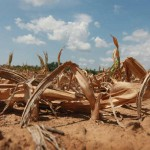 Climate Change: US Drought More Costly Than Hurricane Sandy?