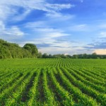 Final Farm Bill Must Save Farmland, Farm Communities, Environment