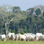New Report: Livestock Production and Climate Change