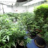pot growing and resource usage