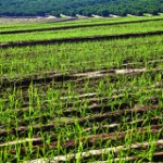 Telling Sugarcane Ethanol's Full Sustainability Story