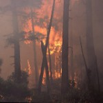 Wildfire, Forests, and Climate Change [INFOGRAPHIC]