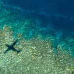 Back-to-Back Bleaching Has Now Hit Two-Thirds of the Great Barrier Reef