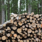 Debate Continues Over Carbon Neutrality of Biomass